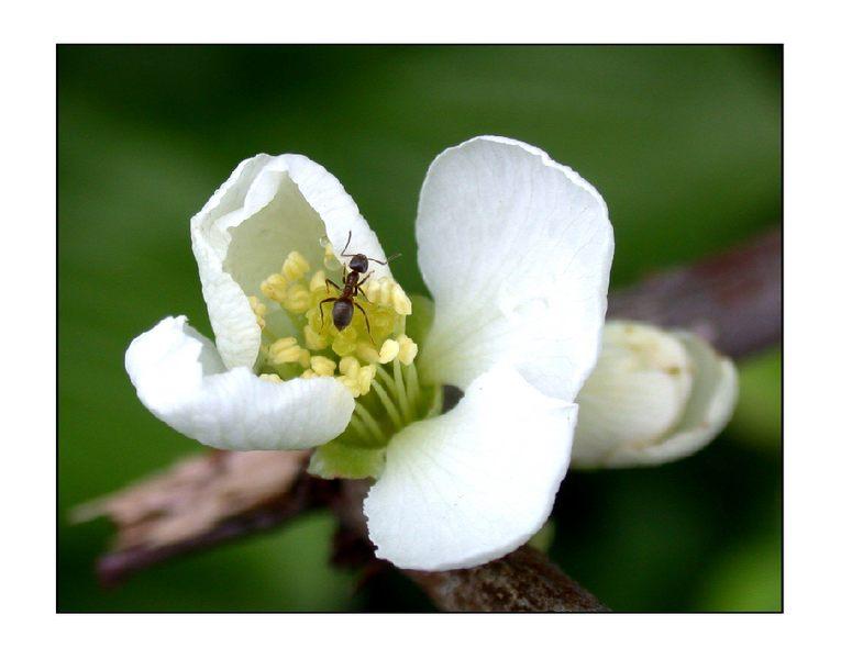 Ameise auf Erkundungsreise