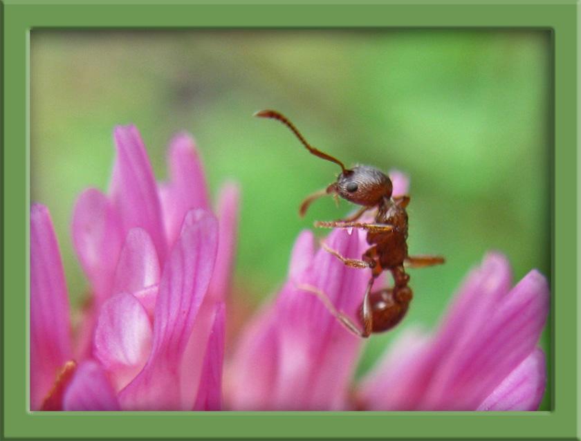 Ameisen...