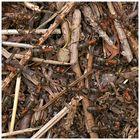 Ameisen auf einem Haufen