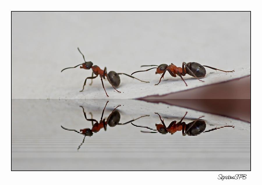 Ameisen auf Wanderschaft....