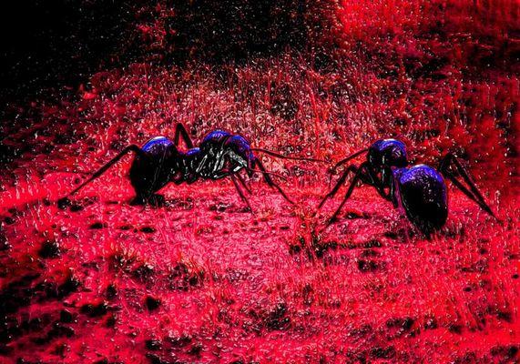 Ameisen ?
