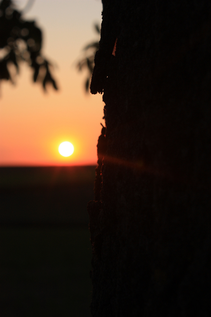 ameisen beim sonnenuntergang