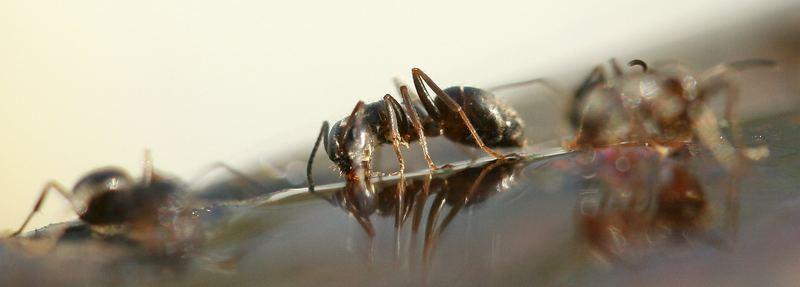 Ameisen im Frühling