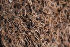 Ameisen im Herbst