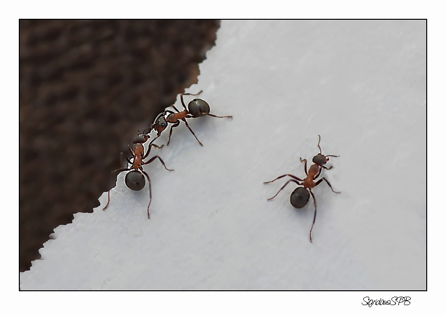 Ameisen unter sich..........