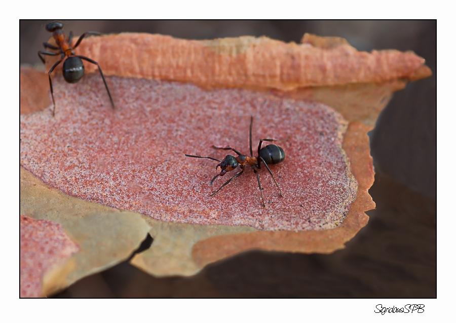Ameisen unter sich.......