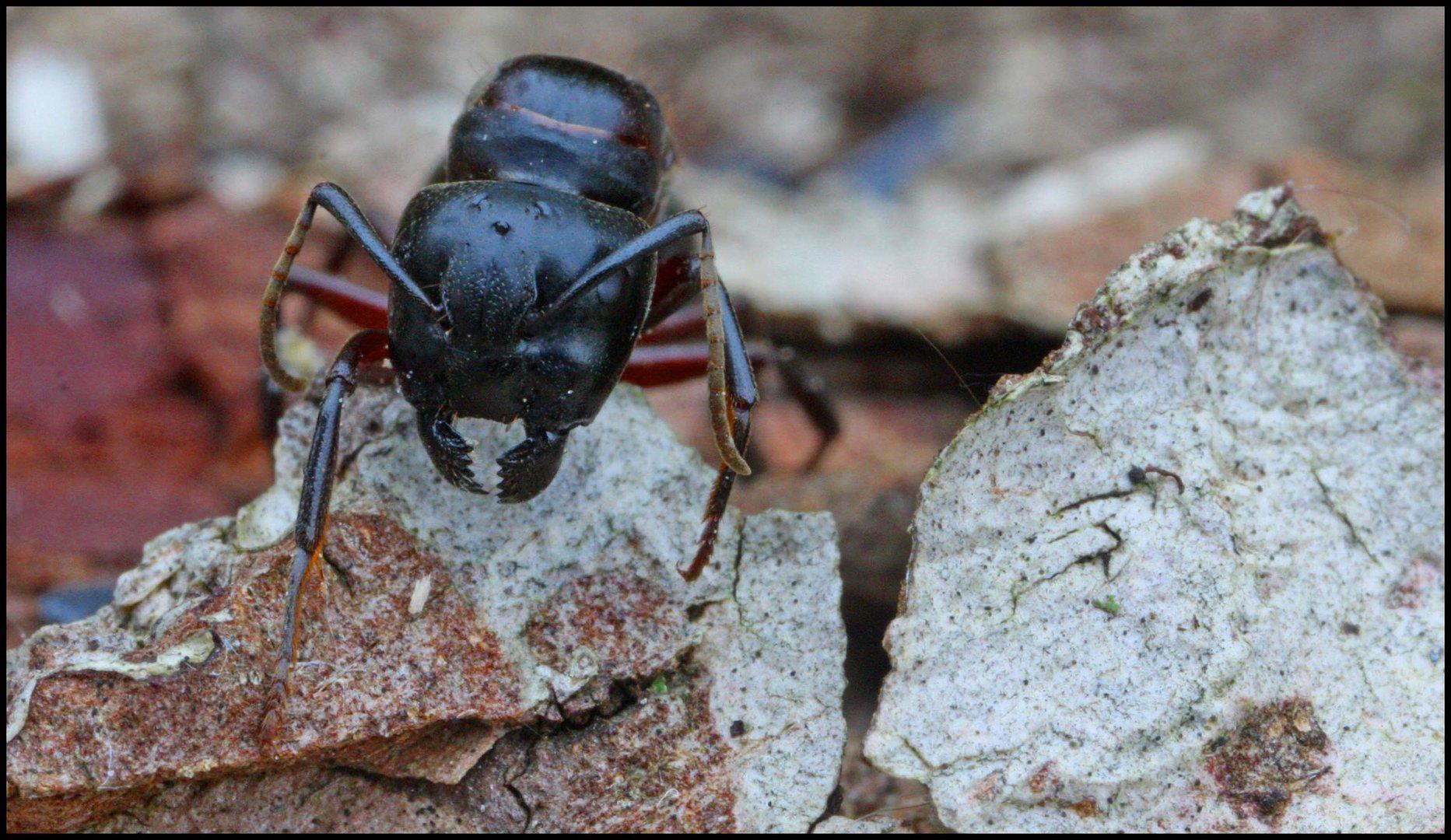 Ameisen-Welt
