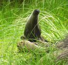 Ameisenbär im Urlaub lässt grüßen