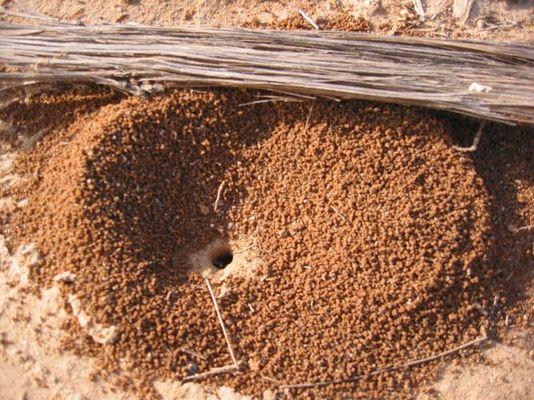 Ameisenhaufen ?