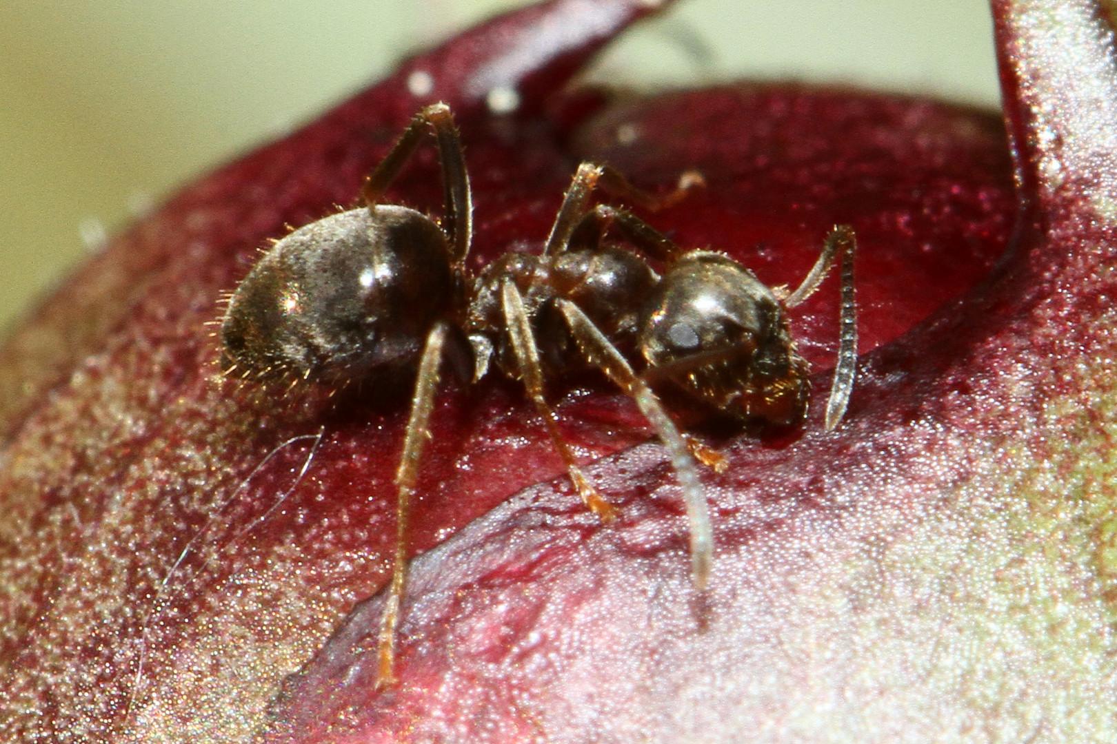 Ameisenmakro mit hohem ISO Wert
