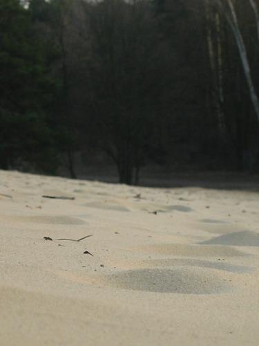 Ameisenperspektive