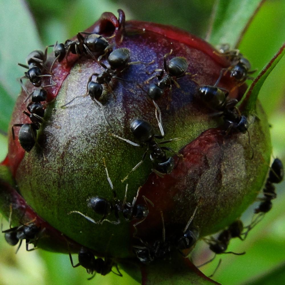 Ameisenplanet