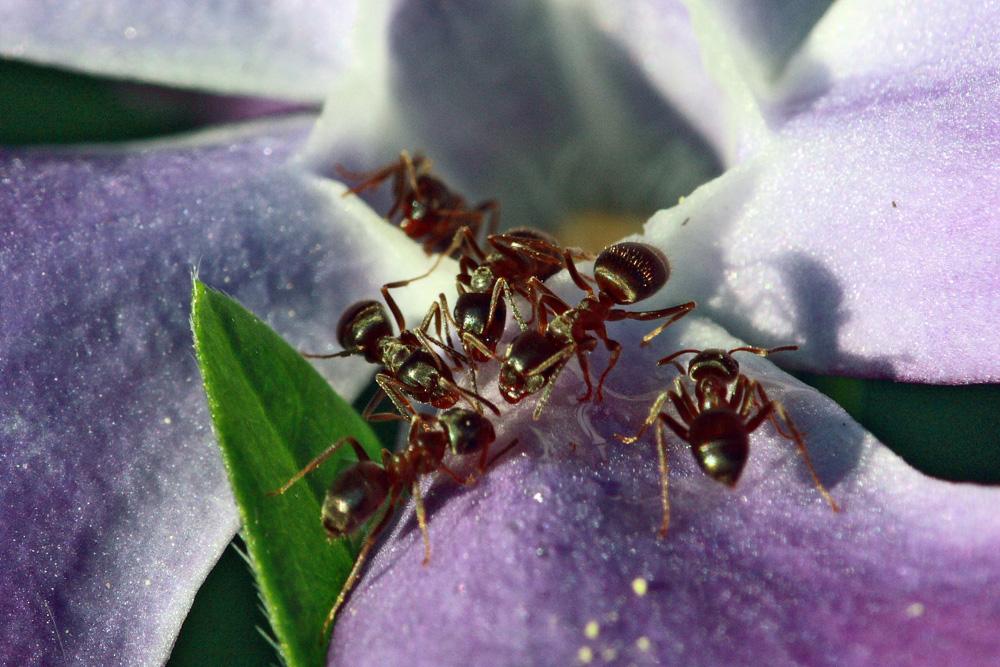 Ameisenversammlung