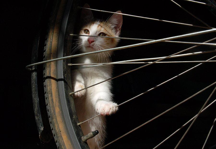 Amelies erste Fahrradstunde