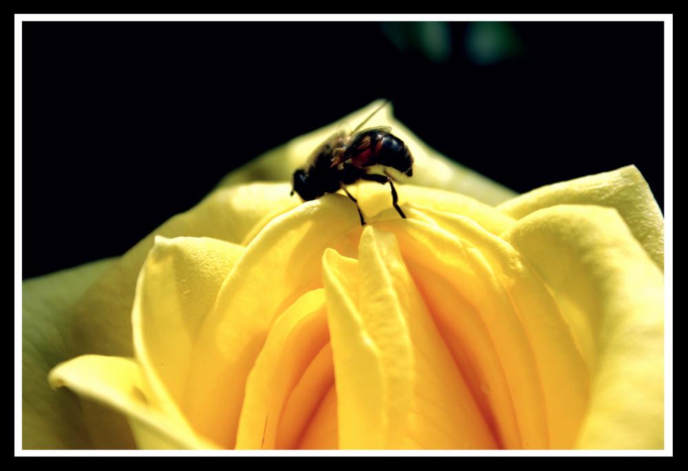 ammirando un'ape