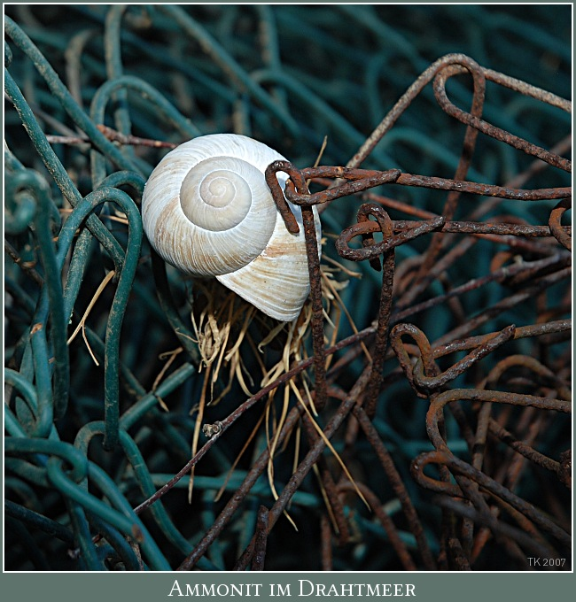 Ammonit im Drahtmeer