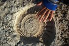 amonite prehistórico