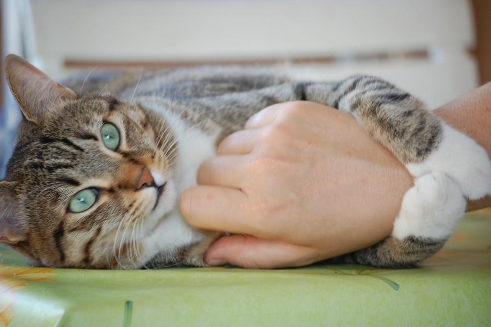 amore felino