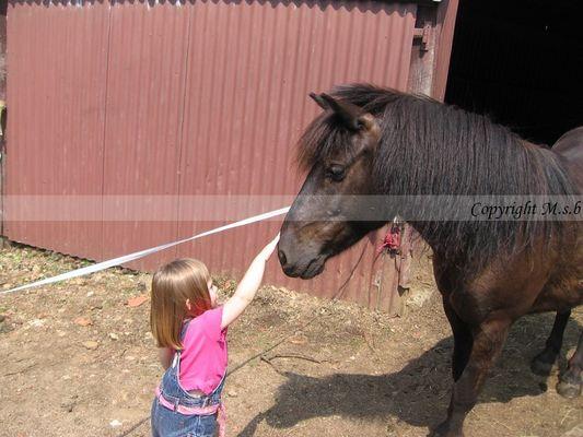 Amour enfant cheval !