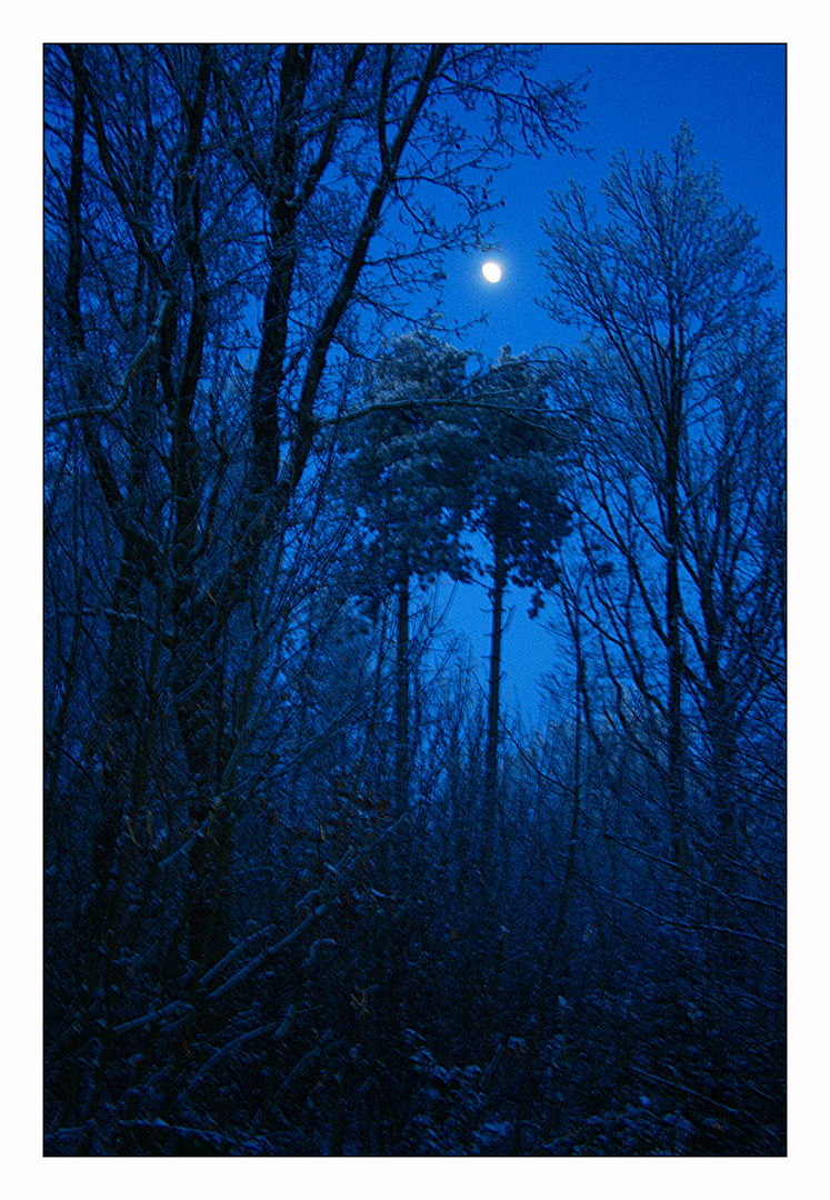 Amoureux sous la lune