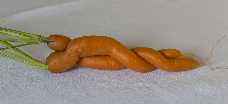 Amours de carottes