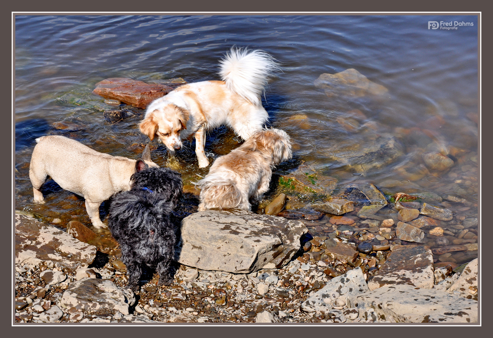 Amy, Badespaß mit Freunden