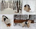 AMY der Schneehund