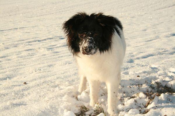 Amy im Schnee