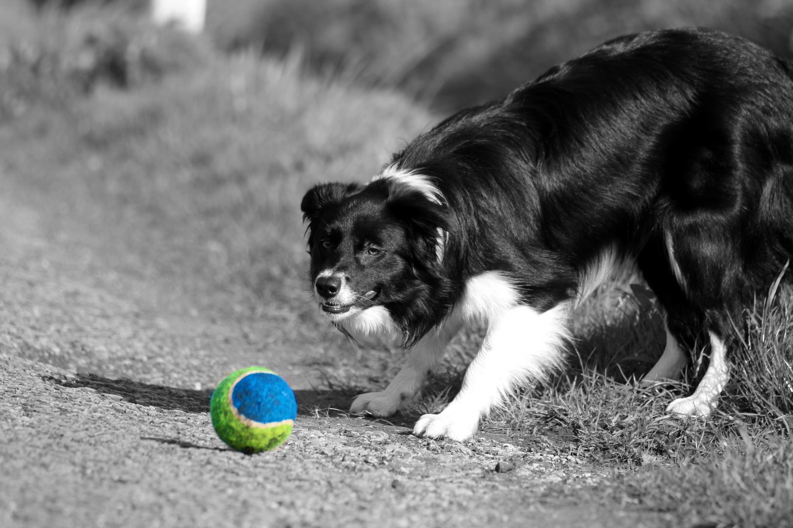 Amy und ihr Ball