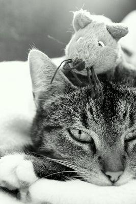 Amy und ihr Freund die Maus