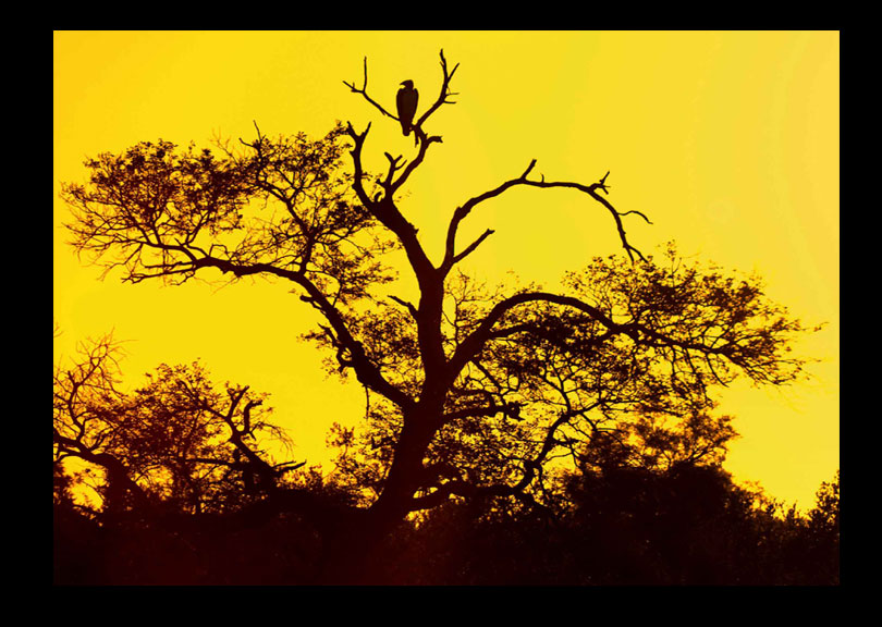 An African Sunrise