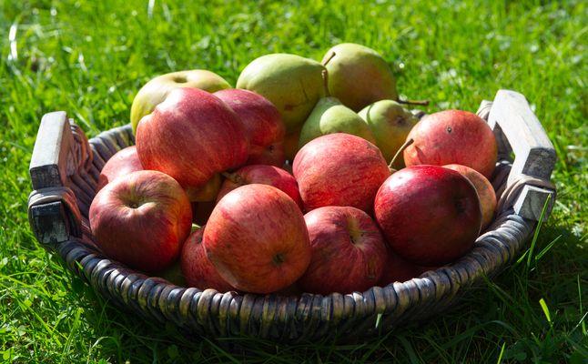 """An apple a day ..."