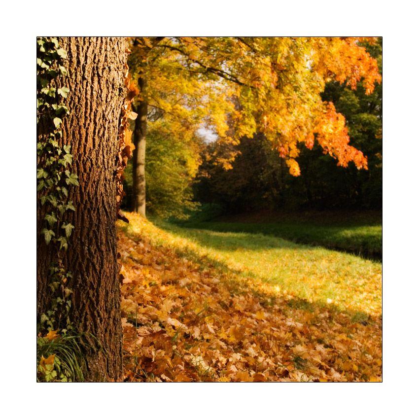 an autumn breeze
