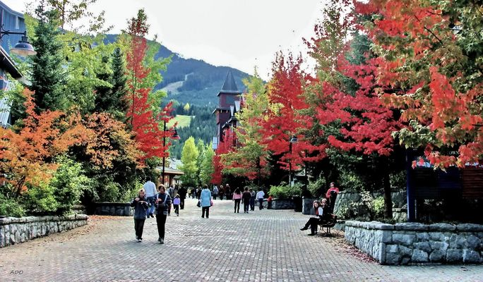 An Autumn Walk Through Whistler