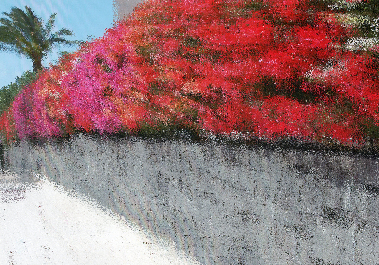 """An Azalea Hedge in Lanzarote"""