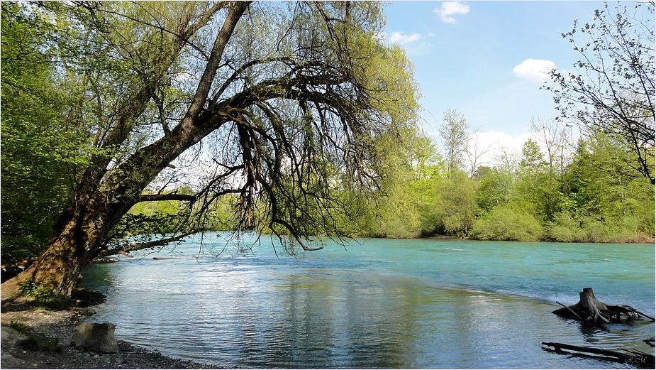 an der Aare, Naturschutzgebiet Elfenau / BE