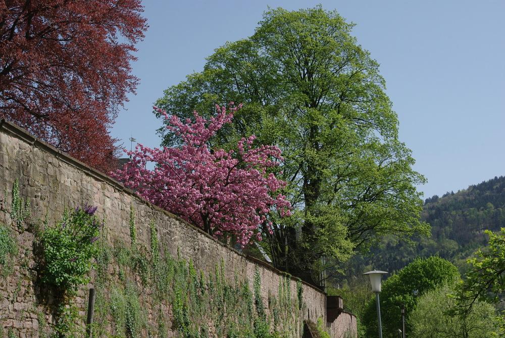 An der Klostermauer
