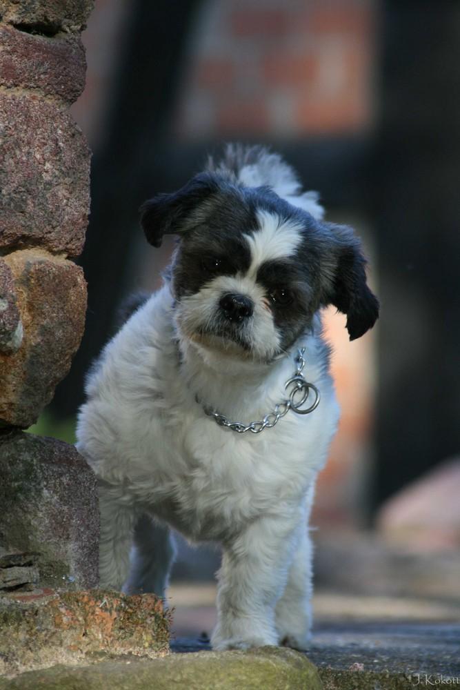 ...an der Mauer auf der Lauer...steht ein kleiner Hund...