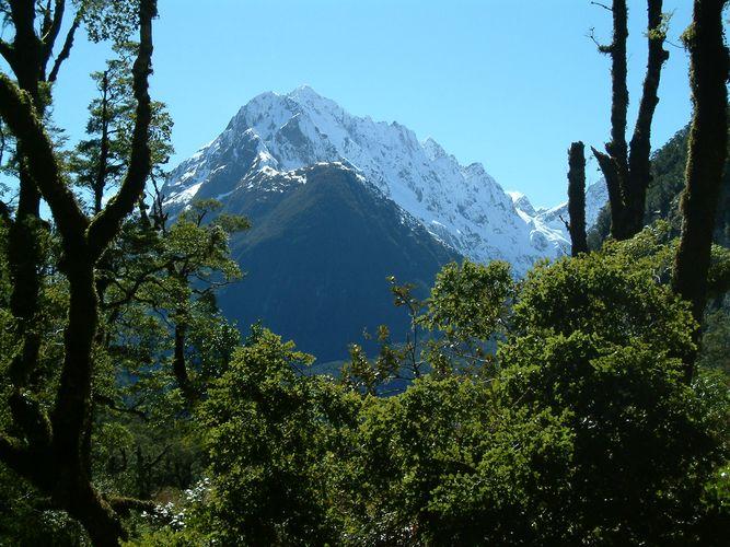 An der Milfordroad (Neuseeland)