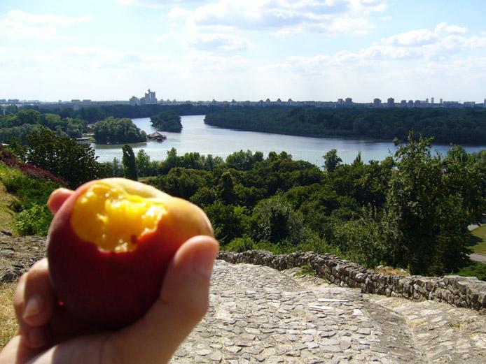 An der Mündung von Sava und Donau