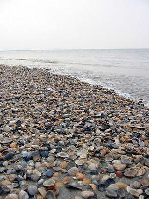 ....an der Nordseeküste....