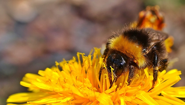 An der Pollenbar