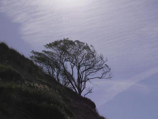 An der Steilküste auf Hiddensee
