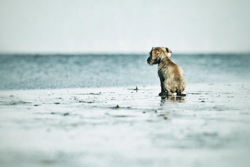 An der wilden Nordsee....