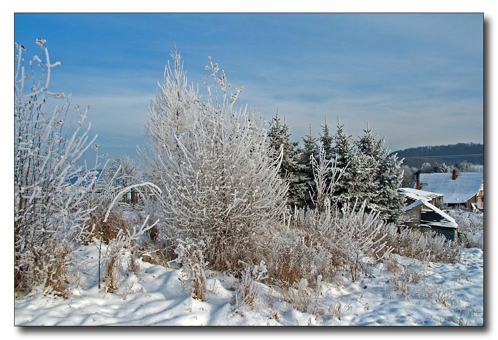An die Bäume im Winter