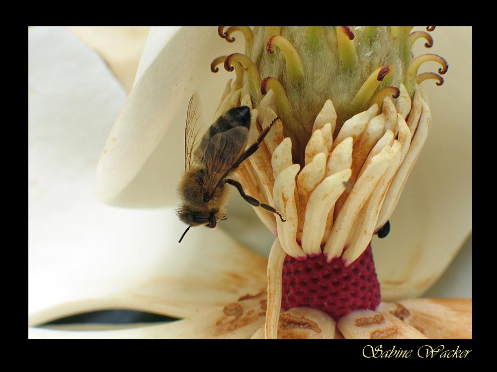 An die Bienen