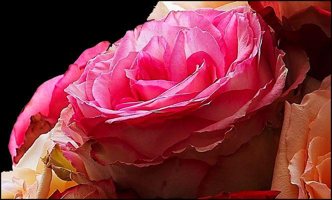an die Rose