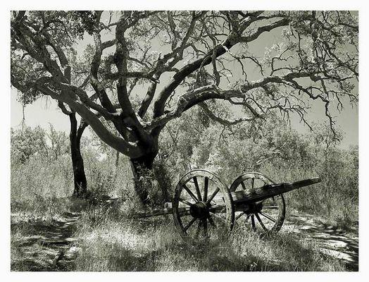 An einem heissen Tag im Korkeichenwald ...
