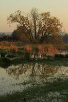 An einem Herbstmorgen