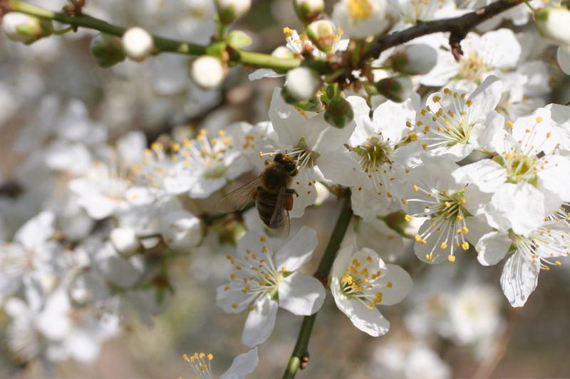 An einem schönen Frühlingstag